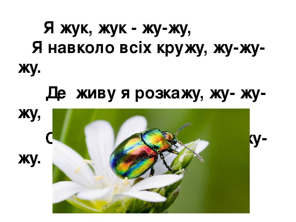 Я жук, жук - жу-жу, Я навколо всіх кружу, жу-жу-жу. Де живу я розкажу, жу- жу-жу, Свою квітку покажу, жу-жу-жу.