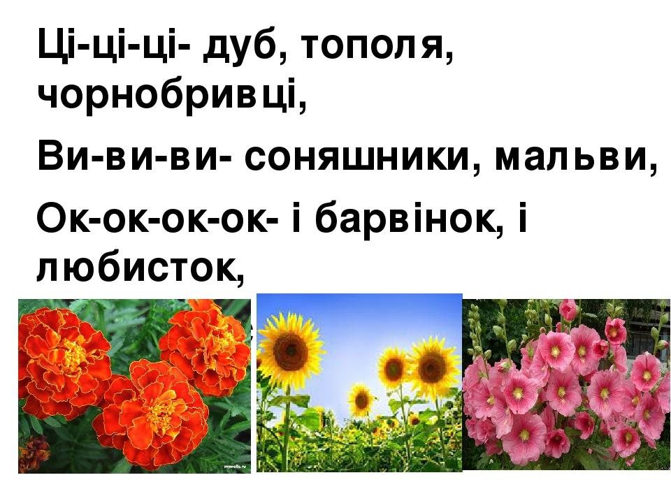 Ці-ці-ці- дуб, тополя, чорнобривці, Ви-ви-ви- соняшники, мальви, Ок-ок-ок-ок- і барвінок, і любисток, Ни-ни-ни-є символом України. У