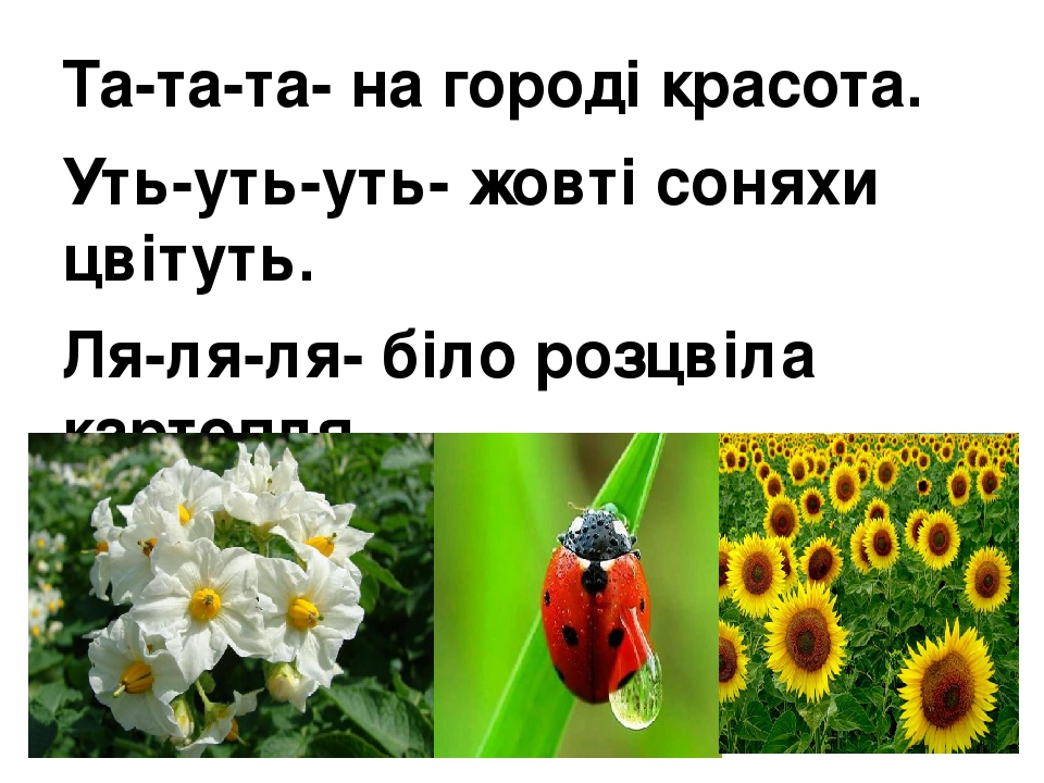 Та-та-та- на городі красота. Уть-уть-уть- жовті соняхи цвітуть. Ля-ля-ля- біло розцвіла картопля. Іє-іє-іє- жук-сонечко червоніє.