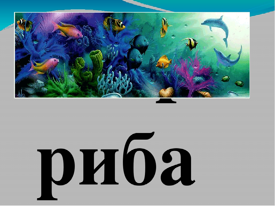 баир риба
