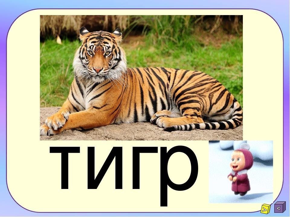 ргит тигр