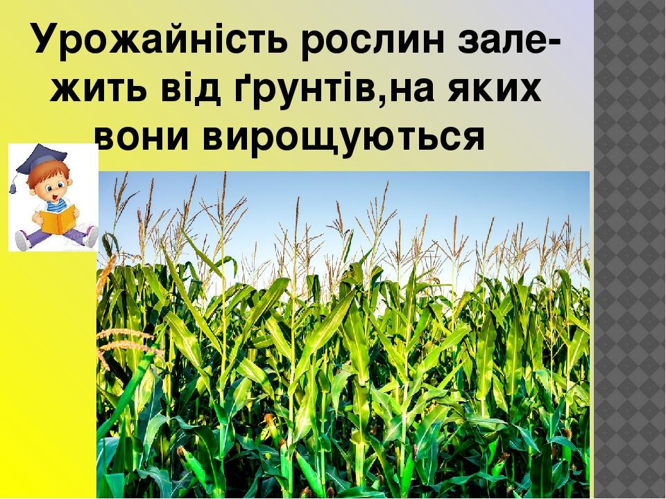 Урожайність рослин зале-жить від ґрунтів,на яких вони вирощуються