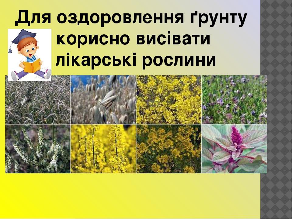 Для оздоровлення ґрунту корисно висівати лікарські рослини