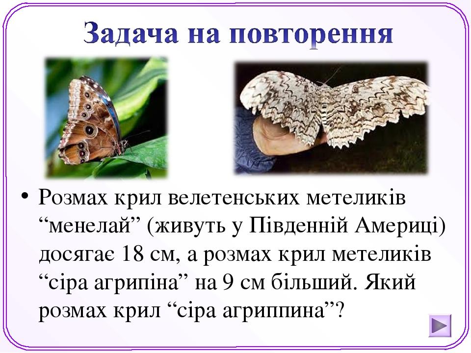 """Розмах крил велетенських метеликів """"менелай"""" (живуть у Південній Америці) досягає 18 см, а розмах крил метеликів """"сіра агрипіна"""" на 9 см більший. Я..."""