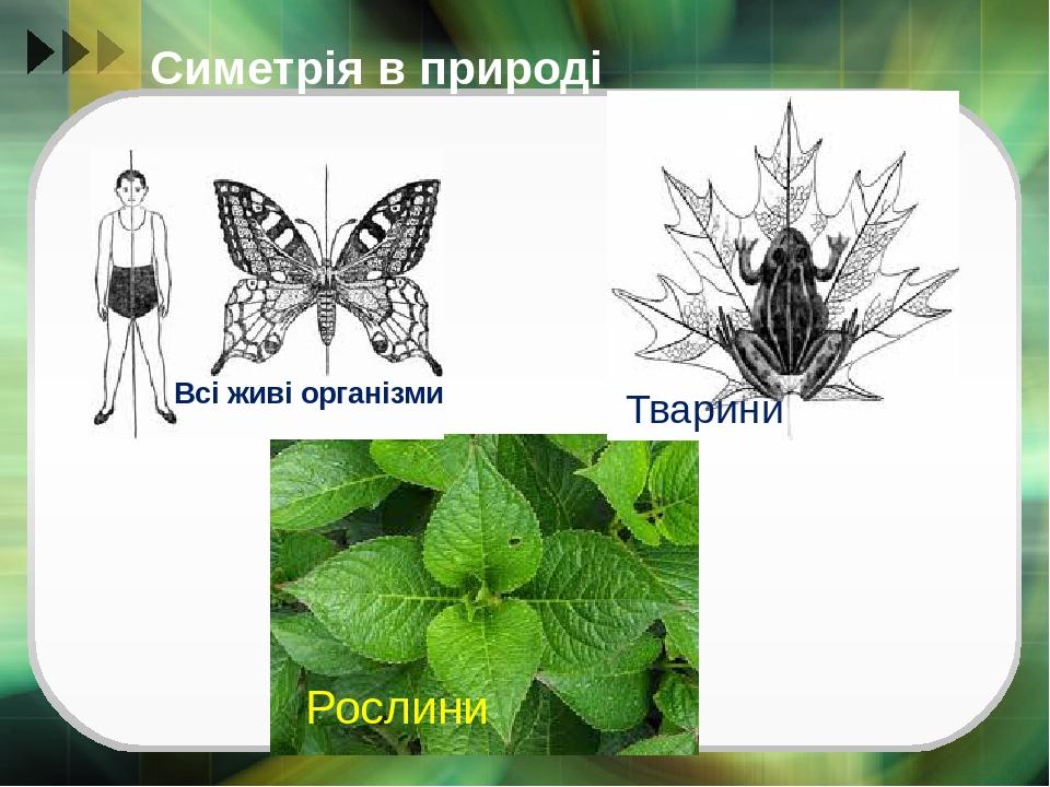 Симетрія в природі Рослини Тварини Всі живі організми