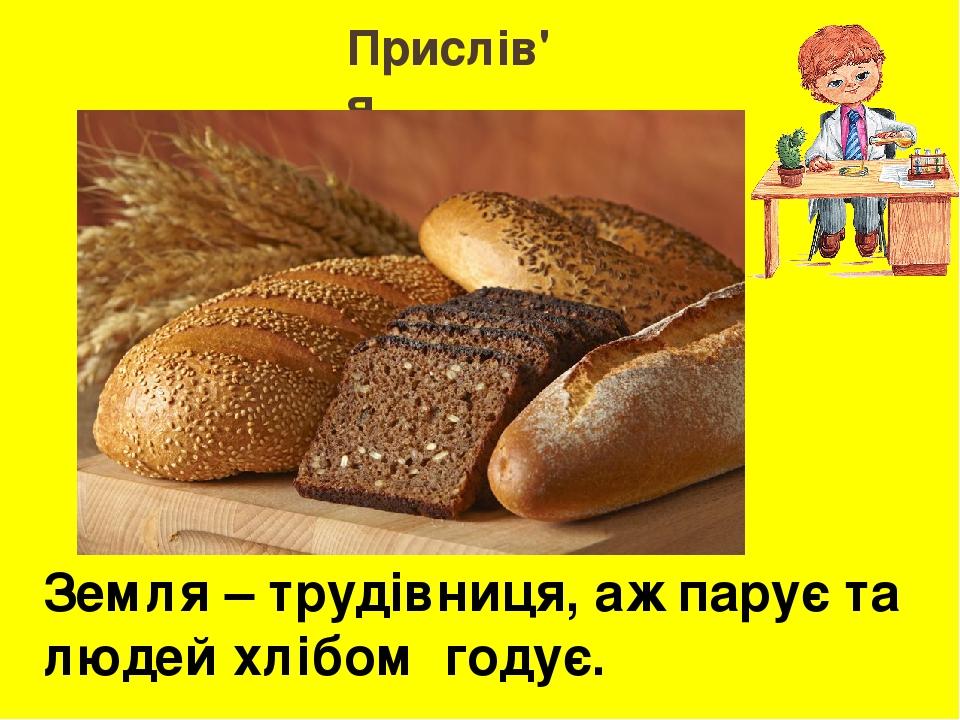 Прислів'я Земля – трудівниця, аж парує та людей хлібом годує.