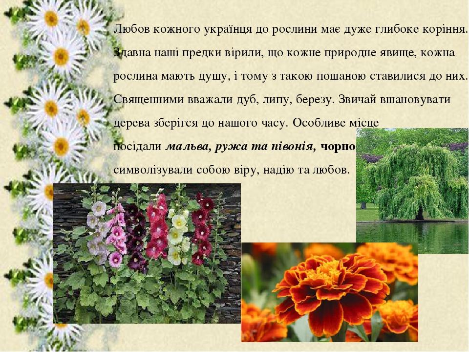 Любов кожного українця до рослини має дуже глибоке коріння. Здавна наші предки вірили, що кожне природне явище, кожна рослина мають душу, і тому з ...