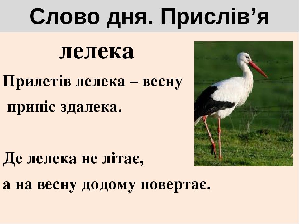 Слово дня. Прислів'я лелека Прилетів лелека – весну приніс здалека. Де лелека не літає, а на весну додому повертає.
