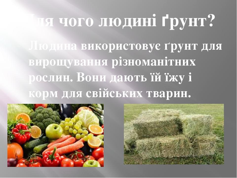 Для чого людині ґрунт? Людина використовує ґрунт для вирощування різноманітних рослин. Вони дають їй їжу і корм для свійських тварин.