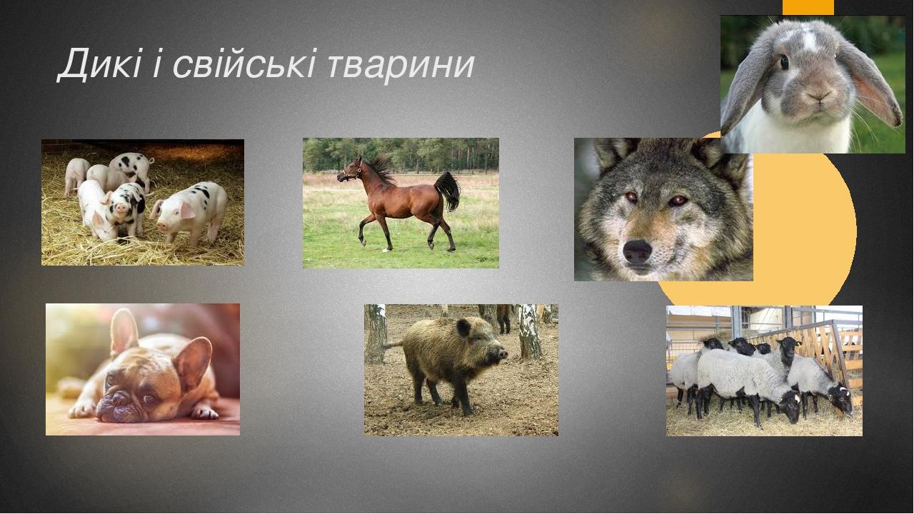 Дикі і свійські тварини
