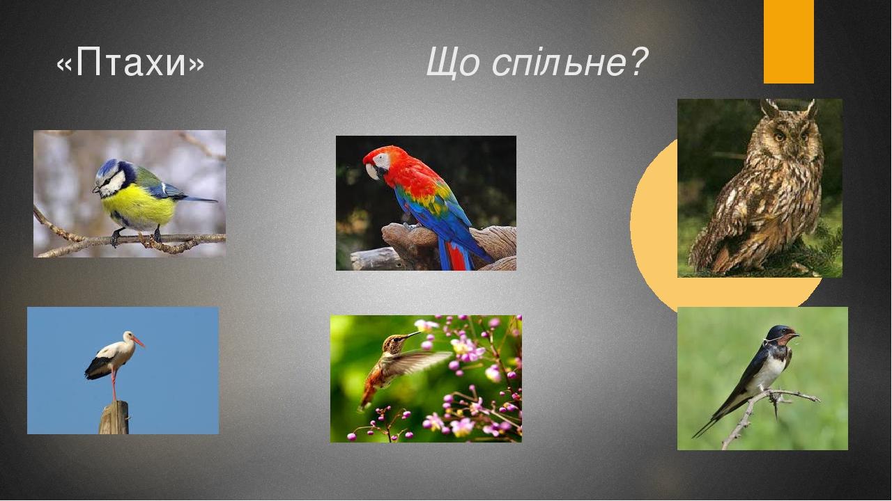«Птахи» Що спільне?