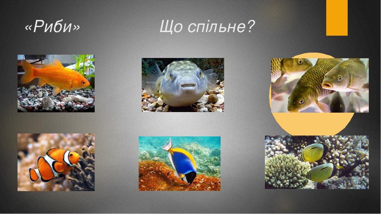 «Риби» Що спільне?