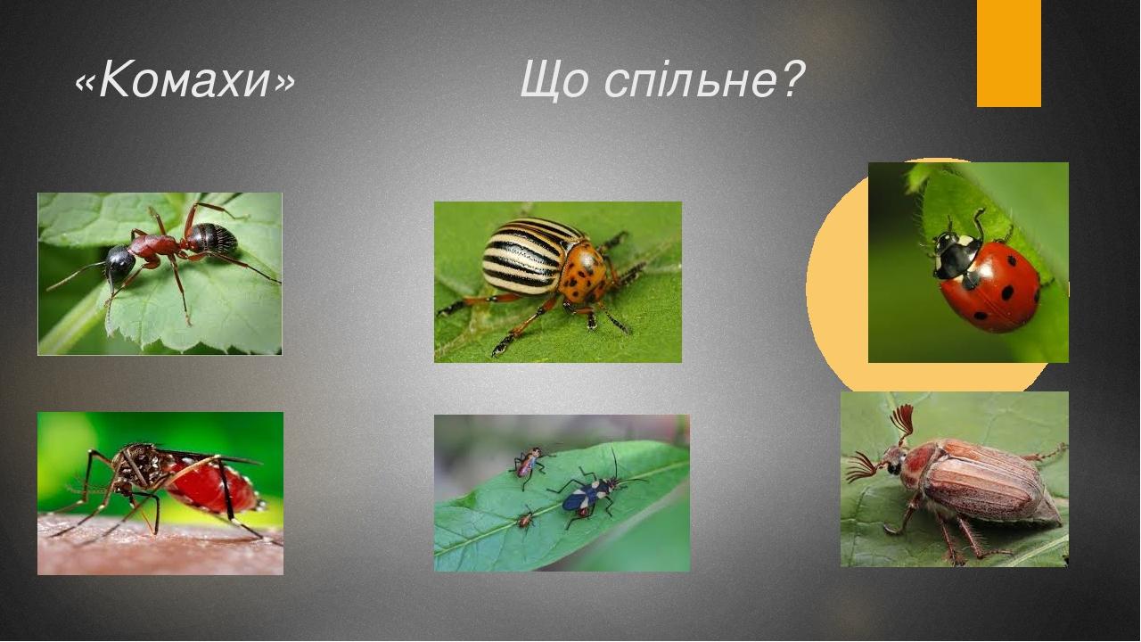 «Комахи» Що спільне?