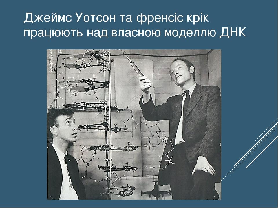Джеймс Уотсон та френсіс крік працюють над власною моделлю ДНК