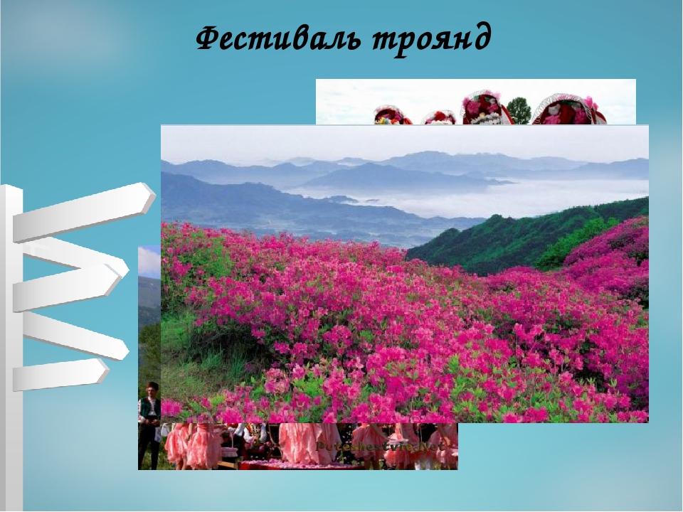 Фестиваль троянд