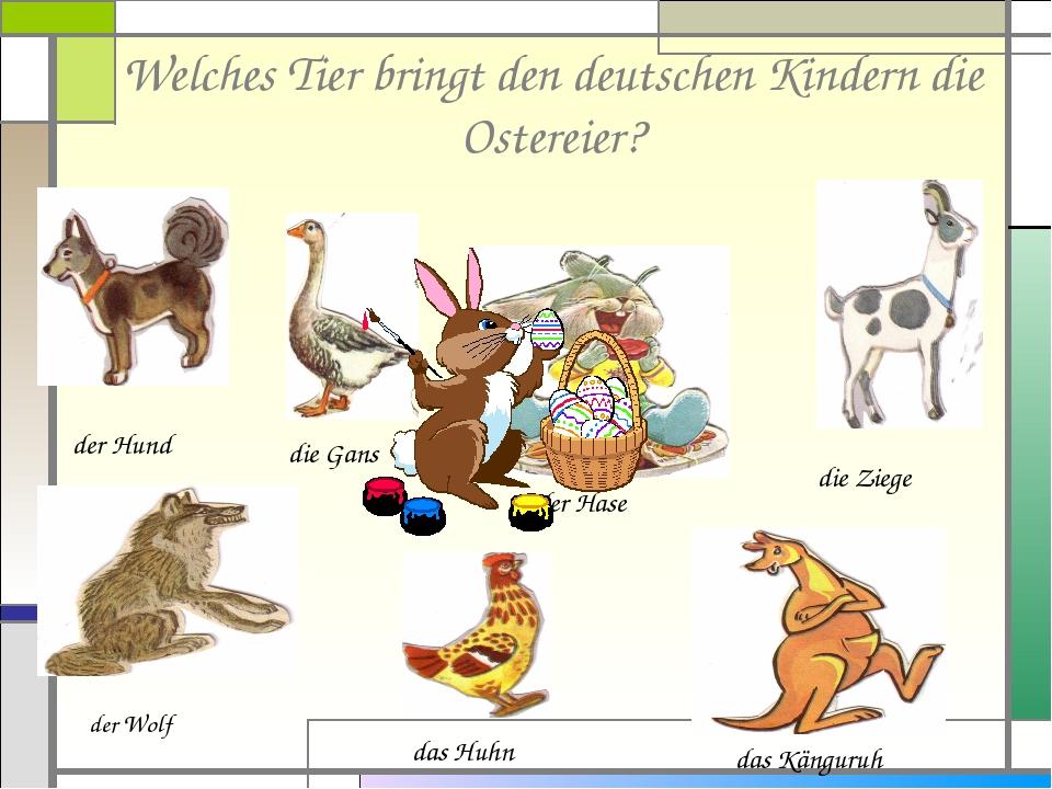 Welches Tier bringt den deutschen Kindern die Ostereier? der Hund die Gans der Hase die Ziege der Wolf das Huhn das Känguruh