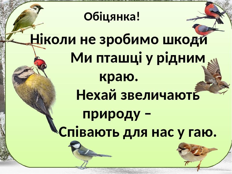 """Інтегрований урок """"Птахи - політ, музика й краса ..."""
