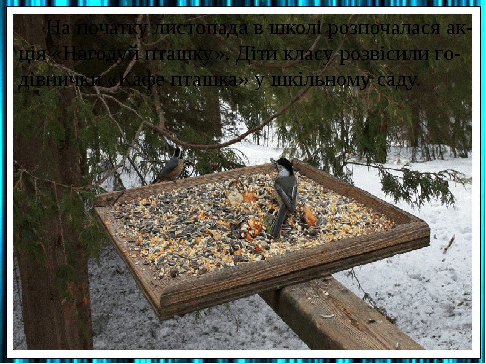 На початку листопада в школі розпочалася ак-ція «Нагодуй пташку». Діти класу розвісили го-дівнички «Кафе пташка» у шкільному саду.