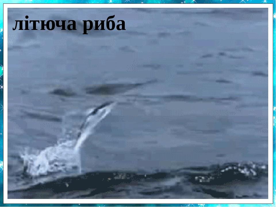 прозора риба салпа китова акула шиндлерія вітрильник морський коник анабас мулистий повзун літюча риба