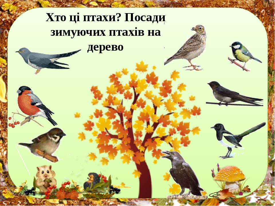Хто ці птахи? Посади зимуючих птахів на дерево
