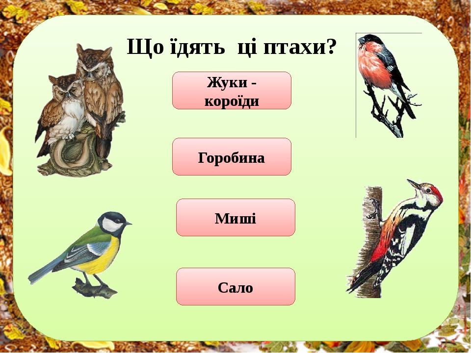 Що їдять ці птахи? Жуки - короїди Горобина Миші Сало